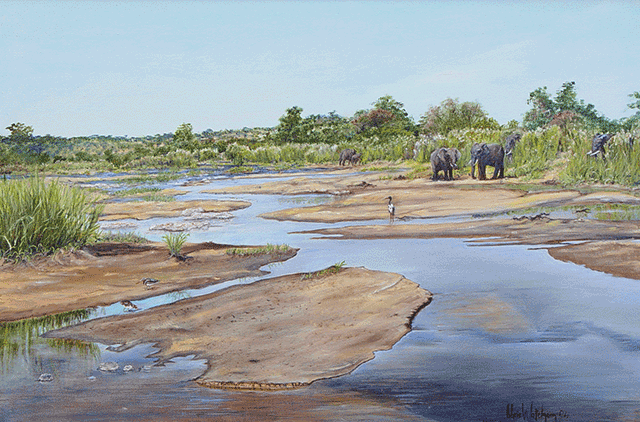 Chris-Watcham---Elephant-on-the-Lower-Sabie-River.png