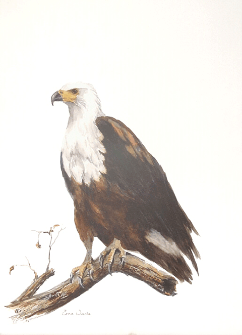 Erna-Wade---Fish-Eagle.1M.png