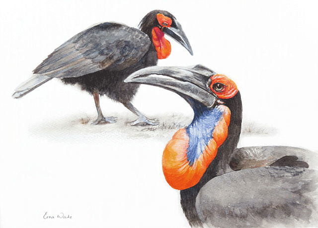 Erna-Wade---Ground-Hornbills.1M.png