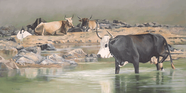 Erna-Wade---Nguni-Beside-Still-Waters.1M.png