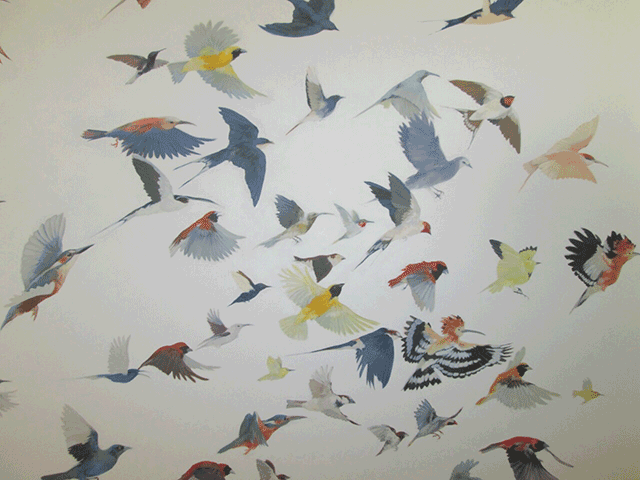 Kirsty-May-Hall---Birds.png