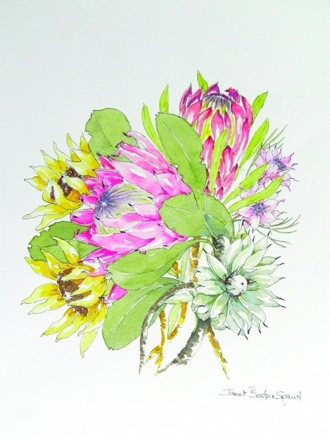 Pg 2 - Janet Bester Spaun - Proteaceae - watercolour pen and ink_640x480_100quality_26.10.2014.jpg